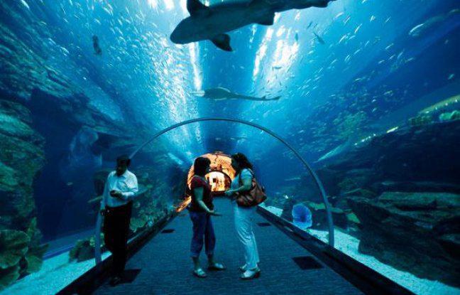 le-grand-aquarium