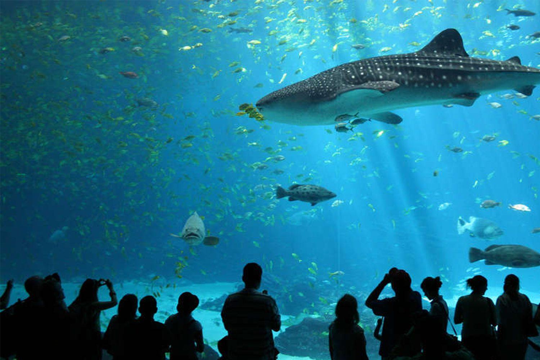 aquarium-de-St-Malo